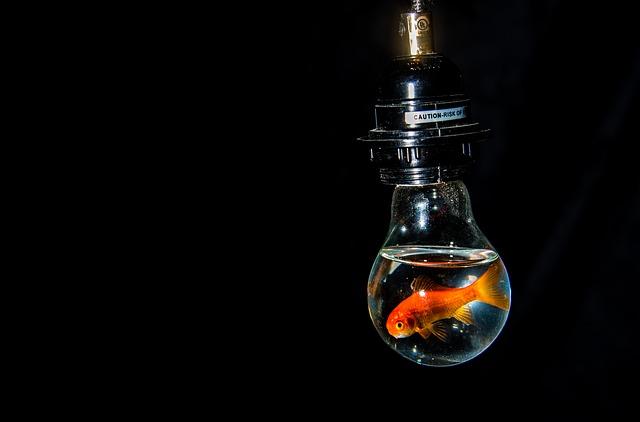 Zlatá rybka pláva v sklenenej žiarovke.jpg